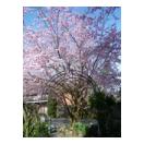 2015-04-12-11.00.49--600x800---480x640- thumb